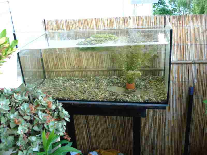 kakerlakenparade lebendfutter f r aquarienfische. Black Bedroom Furniture Sets. Home Design Ideas